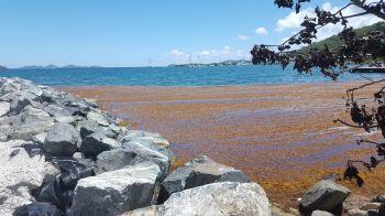 More of the invasive vegetation at Prospect Reef. Photo: VINO