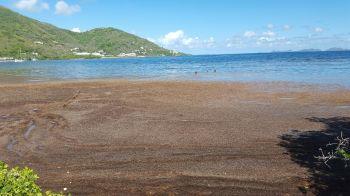 Near Captain Mulligans in Sea Cow's Bay. Photo: VINO