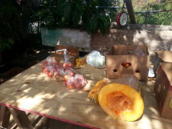 Some of Tomato Man's produce on display during the launch of agriculture week on the island of Virgin Gorda on Thursday February 13, 2014. He complained about the prohibitive cost of water on the island and wants Government to bring some measure of relief. Photo: VINO.