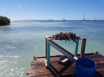 These lobsters made a handsome meal at Potters by the Sea on Setting Point, Anegada! Photo: VINO