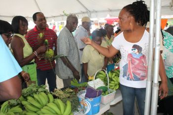 JVD farmer Marinly I. Chinnery gets overwhelming sales for her produce at the Farmers' Week exhibition in Jost Van Dyke on February 5, 2013. Photo: VINO