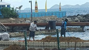 Workers during a clean up exercise at Dolphin Discovery. Photo: VINO/File
