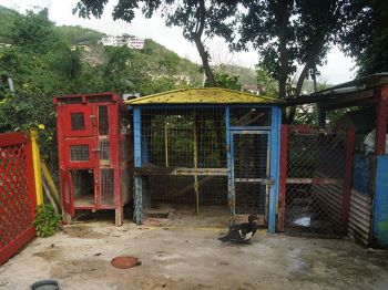 A section of the BVI Humane Society compound that houses rabbits and iguanas among other animals. Photo:VINO/File
