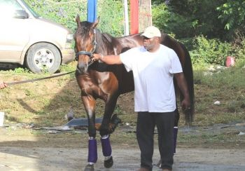 Good Prospecting (seen with owner, Lesmore Smith) is once again coming in as the underdog in today's (January 13, 2013) feature race. Mr Smith believes anyone horse has a chance at winning. Photo:VINO