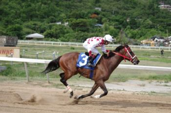 Tortola horse, Chovanes has been entered into the 'big league' after winning the 6 1/2 furlong race for Class A & B horses on July 7, 2019. Photo: VINO/File