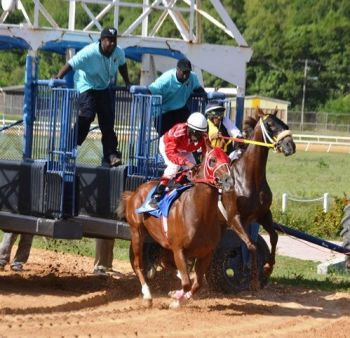 Mrs Patsy C. Lake is currently working towards acquiring a new starting gate for Ellis Thomas Downs. Photo: VINO/File