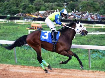 My Pal Shawn (in photo) of Tortola and St Moose of St Croix, USVI will also feature in the Premier's Cup on August Tuesday at Ellis Thomas Downs. Photo: VINO/File