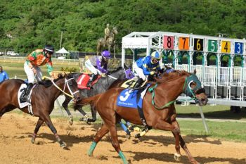 Finding purses for races was one of the biggest challenges for the VI Horse Owners Association in 2016. Photo: VINO/File
