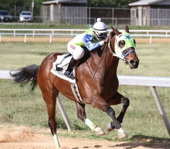 Honors of Family Affair Stables is one of the entries for the feature race of the Boxing Day race card at Ellis Thomas Downs on December 26, 2016. Photo: Provided