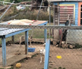 The Humane Society of the BVI has received an eviction notice to remove from the rented space in Johnson's Ghut before the end of 2019. Photo: VINO/File