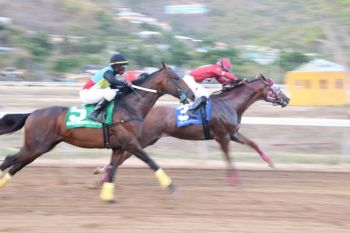The Virgin Islands Horse Owners' Association is urging the Virgin Islands Party (VIP) Government to urgently bring legislation to the House of Assembly (HoA) to legalise betting at horse races locally or risk losing the sport to sister territory United States Virgin Islands (USVI). Photo: VINO/File