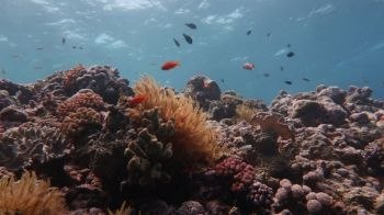 The loss of more complex coral structures means habitats for fish are also wiped out. Photo: Andreas Dietzel