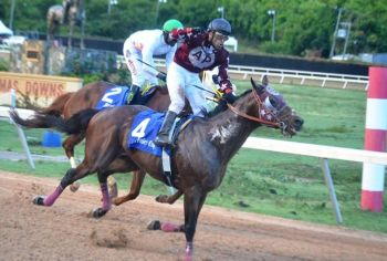 One of the horses in the feature race - Break Up The Game. Photo: VINO/File