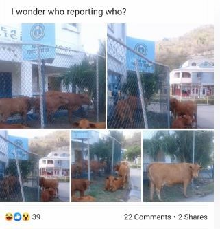 The Facebook post seen here then sparked an ongoing conversation about the dangers of stray animals. Photo: Joycelyn Rhymer/Facebook