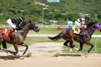 Uncle Mace of Top Priority Racing Stables, right, romped to victory in 125.4 in a race over 6 ½ furlongs for Class D Horses that have never won in their last 3 starts. The race was also the first for the day at Ellis Thomas Downs on February 2, 2020. Photo: Andre S. Dawson aka 'Shadow'