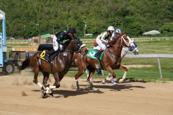 From left: Jordan's Salsa, Formal talent and race winner My Running Mate in the 1 mile for Class C & D Horses. Photo: Andre S. Dawson aka 'Shadow'