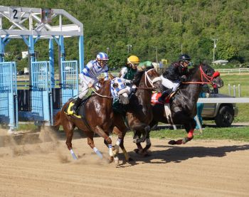 The third showdown of the day, a one-mile for mares and fillies, brought victory for female jockey Cindy Soto on Flashing Cat (centre). Photo: Andre S. Dawson aka 'Shadow'