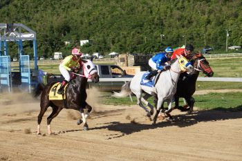 Holy Giacomo of Thomasville Racing Stables, second from left, galloped to victory in the one mile open race for mares and fillies. Photo: Andre S. Dawson aka 'Shadow'