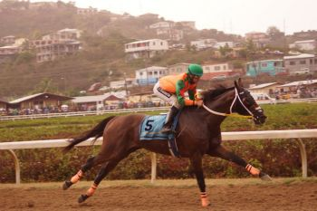 Five years after capturing the Governor's Cup for the Virgin Islands with Good Prospecting in the Carnival Races in St Thomas, USVI, Tortola horse owner Lesmore Smith did it again today with Giant Valley. Photo: Andre 'Shadow' Dawson/VINO