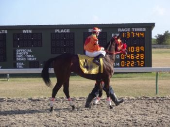 Blake's Lucky Penny getting ready for the mare race. Photo:VINO Team of reporters