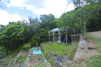 Farming and cultivation on the hills of Cooper Bay, Turnbull Estate, Tortola in the Virgin Islands at the Good Moon Farm. Photo: Provided