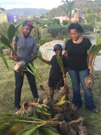 The group which has already has collected more than $275,000 in charitable donations assisted the VI's 'Seeds of Love' with the purchase of 1,000 saplings and seedlings for the local community and travelers, to replant the islands' indigenous trees and vegetation—much of which was wiped out in the storms. Photo: Seeds of Love