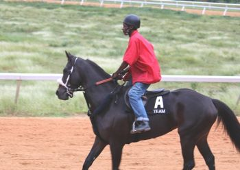 Good Evening Officer being put through her morning paces on December 23, 2012. Photo:VINO/File