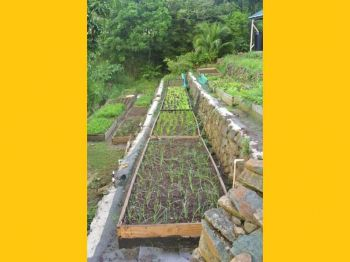 Mr Aragorn Dick-Read VI's agriculture development should not be about greenhouses or hydroponics as it is not viable with climate change and increase hurricane activity. Photo: Provided