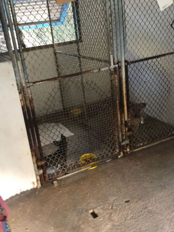 Some of the dogs that are still being housed at the animal shelter. Photo: Team of Reporters