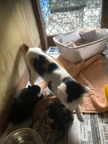One of the cats that gave birth to some kittens. Photo: Team of Reporters