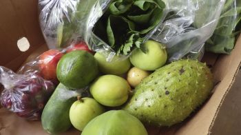 Scenes and produce at the Good Moon Farm, in Cooper Bay, Turnbull Estate, Tortola. Photo: Provided