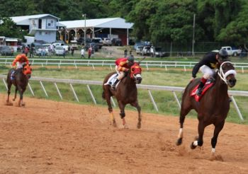 Really Uptown of the L&B Stables powering to victory in the feature race today December 26, 2012 at Ellis Thomas Downs. Slevin came in second and Good Prospecting third. Photo: VINO