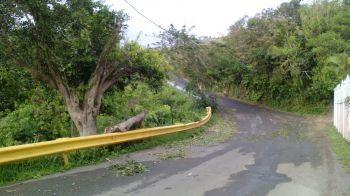 Along Great Mountain road this morning, August 28, 2015. According to Mr Leroy A. E. Abraham, the tripping of the BVIEC feeders were as a result of fuses blowing primarily because of fallen trees due to high winds. Photo: VINO