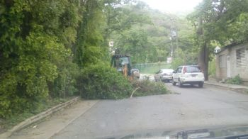 Maintenance workers removing a fallen branch from the roadway at Sea Cows Bay this morning, August 28, 2015. Photo: VINO