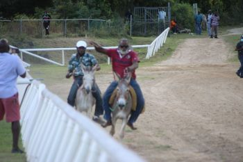 As part of a donkey derby, two donkeys had fans peeling with laughter as they trotted down the track. Photo: VINO
