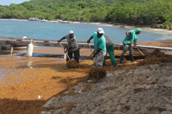 The men doing volunteer service at Trellis Bay to rid the bay of unsightly sea weeds. Photo: VINO