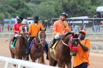 Horse owners have long been calling for Pari-mutuel wagering to be implemented in the Virgin Islands. Photo: VINO/File