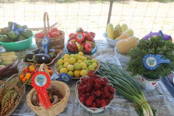 There is sufficient land to allow farmers of Anegada to produce large number of crops for local markets. Photo: VINO