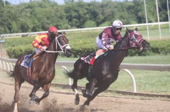 Swagg Daddy (right) of St Thomas emerged the new Governor's Cup champion when he pulled off an upset win to defeat a field which included last year's champion, Really Uptown at the Clinton E. Phipps racetrack today, May 2, 2014. Photo: Andre 'Shadow' Dawson/File