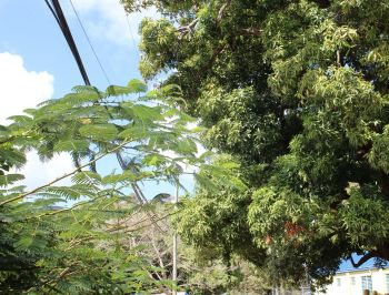 Electrical wires seen near the tree that Bryan Malone was in at the time of his death. Photo:VINO
