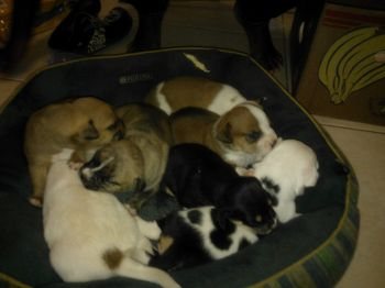 Pups now motherless. Their mother was allegedly poisoned in late April 2013 in Brewers Bay. Photo: Provided