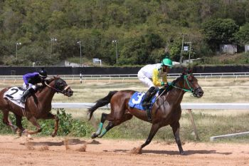 Prince of Speed won ahead of Buy Buy Buy in race 2. Photo: VINO