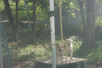 Two of the puppies up for adoption at the animal shelter. Photo: VINO