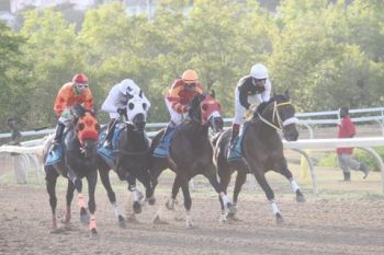 Really Uptown (right) ahead of the pack during his race before winning the Governor's Cup. Photo: VINO Team of reporters