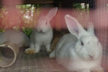 Some of the rabbits up for adoption at the animal shelter. Photo: VINO