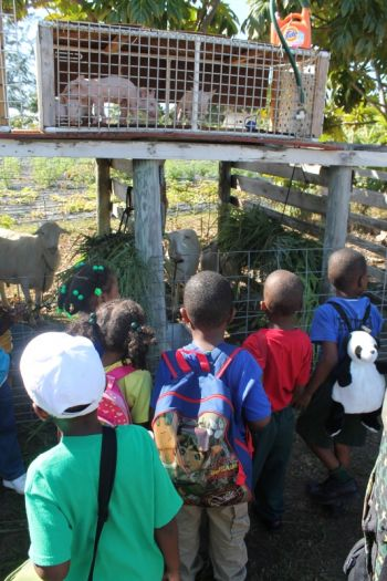 School children all excited about the piglets at the VG Farmers' Week exhibition. Photo: VINO