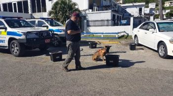 A demonstration of the detection skills in the new K9 unit. Photo: Team of Reporters