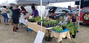 Display items at the first Festival Market ranged from produce to plants. Photo: VINO
